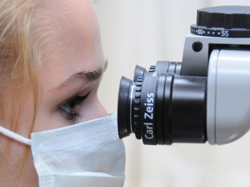 wurzel-mikroskop.jpg